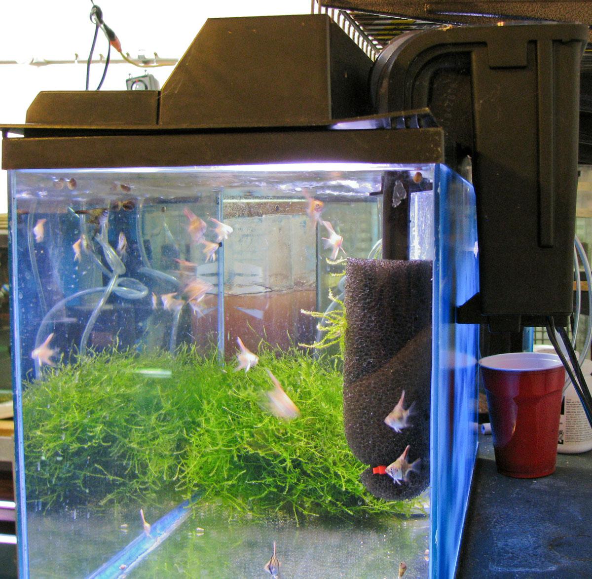 Fish tank filter maintenance setup gold fish tank set up for Setting up a fish tank
